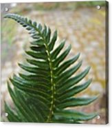 Fern Art Prints Green Garden Fern Branch Botanical Baslee Troutman Acrylic Print