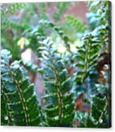 Fern Art Prints Green Sunlit Forest Ferns Giclee Baslee Troutman Acrylic Print