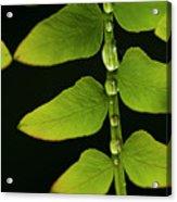 Fern Close-up Nature Patterns Acrylic Print
