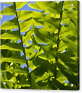 Fern Fronds Against Blue Sky Acrylic Print