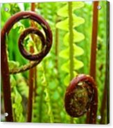 Fern Fronds Fine Art Photography Forest Ferns Green Baslee Troutman Acrylic Print