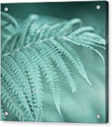 Fern Leaves Abstract 1. Nature In Alien Skin Acrylic Print