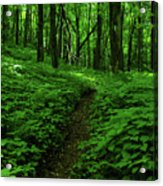 Fern Lined At In Ma Acrylic Print