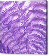 Fern Passion Acrylic Print