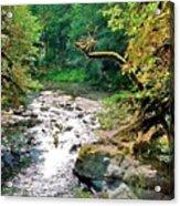 Fern River Oregon Acrylic Print