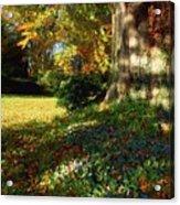 Fernhill Gardens, Co Dublin, Ireland Acrylic Print