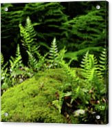 Ferns And Moss On The Ma At Acrylic Print