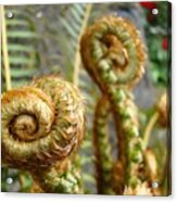 Ferns Art Print Forest Fern Artwork Canvas Baslee Troutman Acrylic Print