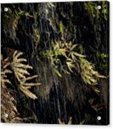 Ferns Below Falls By Jean Noren Acrylic Print