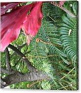 Ferns Come Alive Acrylic Print