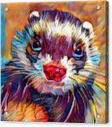 Ferret Acrylic Print
