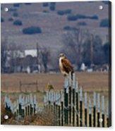 Ferruginous Hawk And Meadowlark Acrylic Print