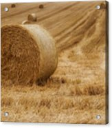 Festival Of Hay Balls In Scotland Acrylic Print
