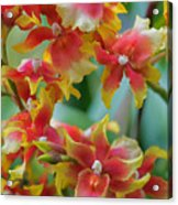 Festive Orchids Acrylic Print