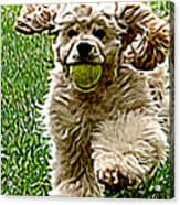 Fetch Acrylic Print