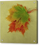 Feuilles D'automne I / Fall Leaves I Acrylic Print