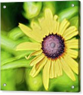 Fibonacci In The Light Acrylic Print
