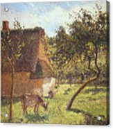 Field At Varengeville Acrylic Print by Camille Pissarro