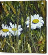 Field Daisies Acrylic Print