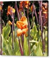 Field For Iris Acrylic Print