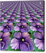 Field Of African Violets Acrylic Print