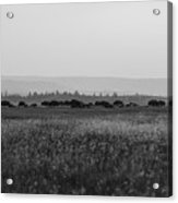 Field Of American Bison Bw Acrylic Print