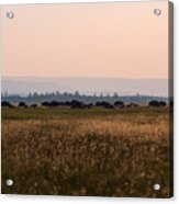 Field Of American Bison  Acrylic Print