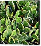 Field Of Cactus Paddles Acrylic Print