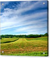 Field Of Dreams Two Acrylic Print