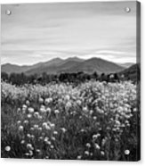 Field Of Flowers In Black And White Acrylic Print