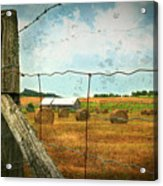 Field Of Freshly Cut Bales Of Hay Acrylic Print