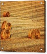 Field Of Gold #3 Acrylic Print