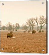 Field Of Hay Acrylic Print