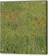 Field Of Hope Acrylic Print