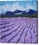 Field Of Lavender Acrylic Print