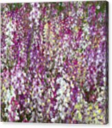 Field Of Multi-colored Flowers Acrylic Print