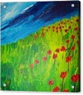 field of Poppies 2 Acrylic Print