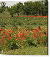 Field Of Poppies On Torcello In Venice Acrylic Print