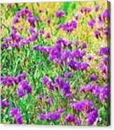Field Of Purple Flowers Acrylic Print