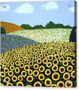 Field of Sunflowers Acrylic Print