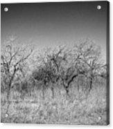 Field Of Trees Acrylic Print