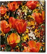 Field Of Tulips Acrylic Print
