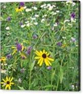 Field Of Wildflowers Acrylic Print