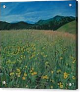 Field Of Yellow Flowers Acrylic Print