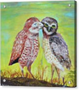 Field Owls  Acrylic Print