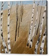 Field With Birches Acrylic Print