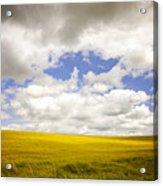 Field With Dramatic Sky. Acrylic Print