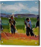 Field Workers In Watsonville - Study Acrylic Print