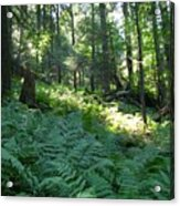 Fields Of Ferns Acrylic Print