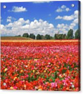 Fields Of Flowers At Nir Banim Acrylic Print